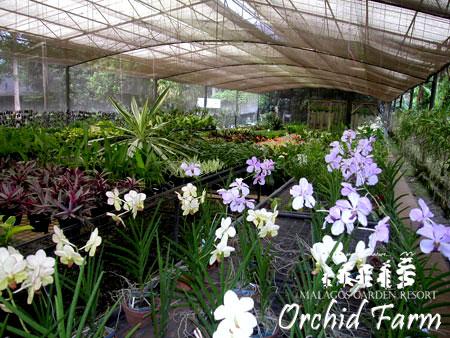 mgr-orchid-farm-1