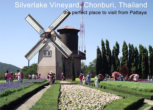 Silverlake-Vineyard-Pattaya