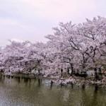 Paket Jepang Sakura Season