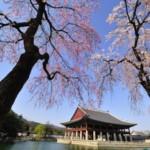 Paket Tour Korea Jeju 7D5N Favourite Spring Free Everland – Nanta Show