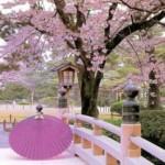 spring korea tour