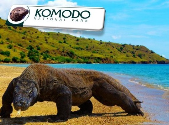 Paket Tour Komodo Flores Murah
