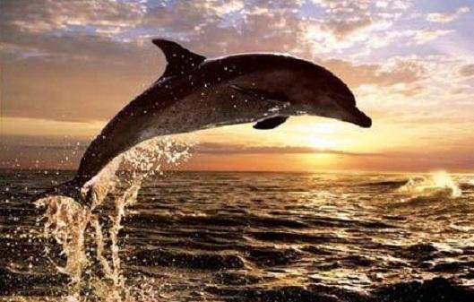 Tour Dolphin Lovina