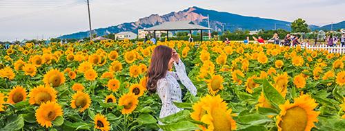 Saraburi Sunflower Farm