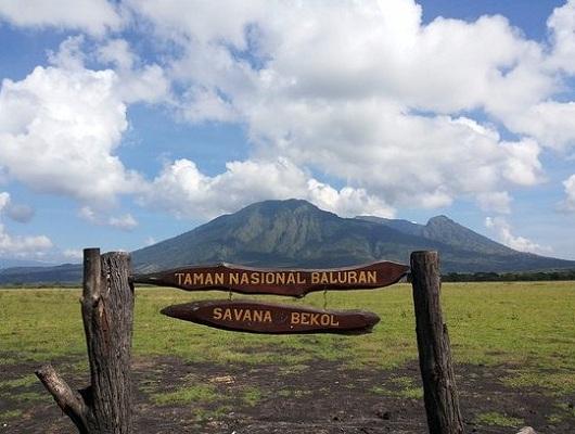 Paket Tour Banyuwangi Savana Bekol
